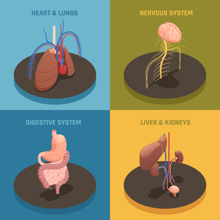 Human internal organs anatomy isometric icons of nervous system, stomach, heart, lungs, liver and kidney