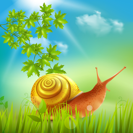 Snail in grass field with maple branch vector illustration Illustration