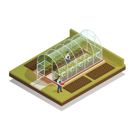 Instalación de invernadero de plástico en forma de túnel con trabajadores regando plantas y fertilizando plántulas composición isométrica ilustración vectorial