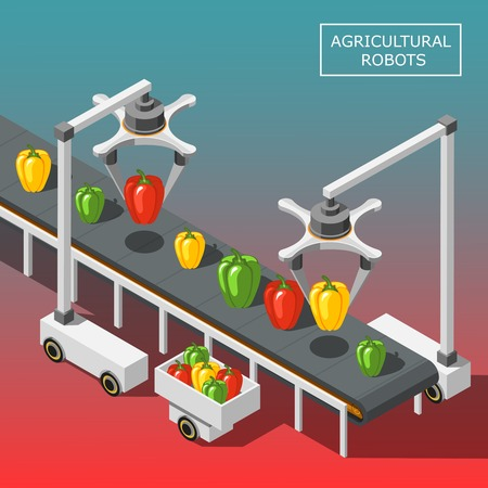 Agricultural robots isometric background with modern automated devices intended for vegetable sorting on transporter vector illustration Illustration