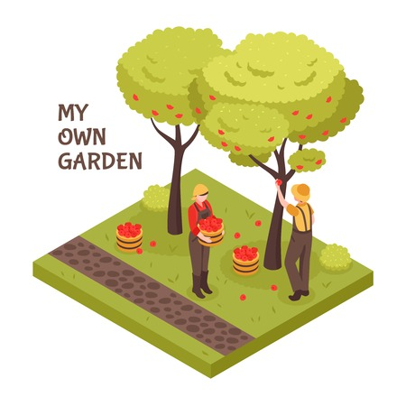 Gardening isometric concept with trees fruit and lawn symbols vector illustration Çizim
