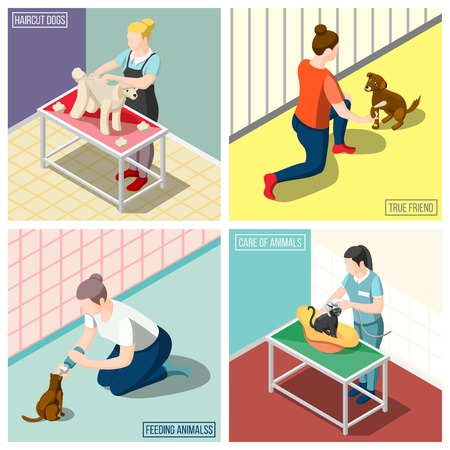 Women volunteers during feeding animals, washing cats, grooming dog isometric design concept isolated vector illustration Фото со стока - 98144566