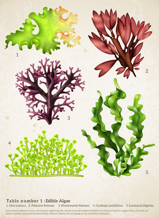 Realistic seaweed set with images of different underwater plants with biology text captions on paper background vector illustration