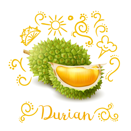 Exotic tropical fruit durian with yellow doodles, composition on white background vector illustration