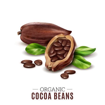 Colored realistic cocoa composition with organic cacao bean headline and broken beans vector illustration Ilustração