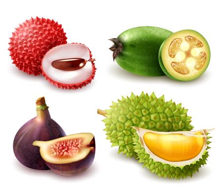 L'insieme dei frutti esotici realistici compreso il litchi, il feijoa, il fico e il durian ha isolato l'illustrazione di vettore 3d Archivio Fotografico - 99521208