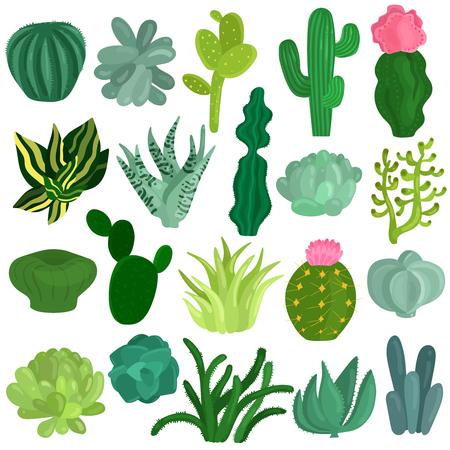 サボテンと多肉植物品種アロエクラスラエケベリアオプンティアエウフォルビア単離ベクターイラスト