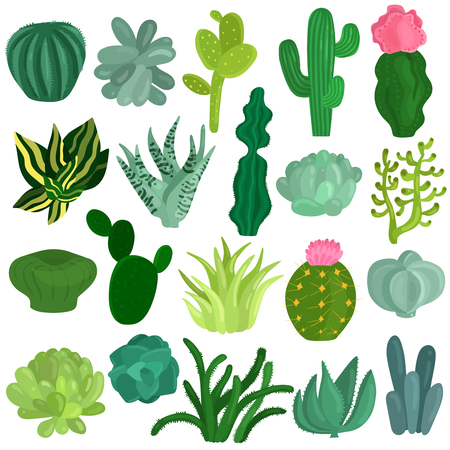 Cacti and succulent plants varieties flat icons collection with aloe crassula echeveria opuntia euphorbia isolated vector illustration