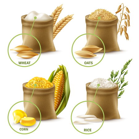 Set of agricultural cereals including sacks with wheat flour, oat, corn and rice isolated vector illustration