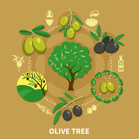 Olive tree, branches with green and black fruits round composition on sand background flat vector illustration  Иллюстрация