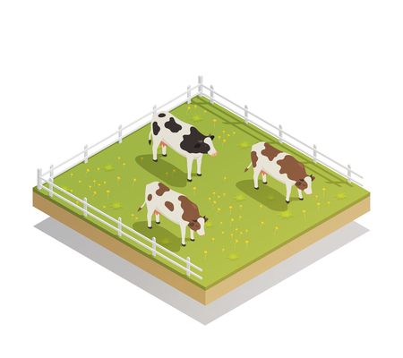 Dairy production milk factory