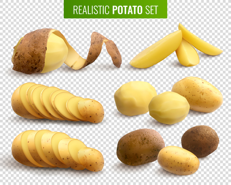 Raw potatoes set on transparent background with whole root crops and sliced pieces  realistic vector illustration