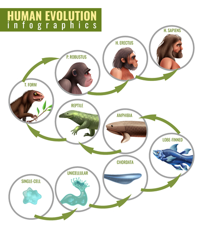Human evolution infographics with development stages from single cell to homo sapiens on white background vector illustration