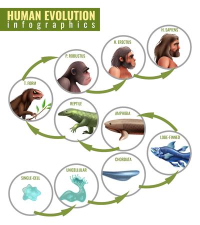 Infografiken der menschlichen Evolution mit Entwicklungsstadien von Einzelzelle zu Homo Sapiens auf weißer Hintergrundvektorillustration