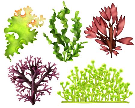 Conjunto de algas marinas realistas