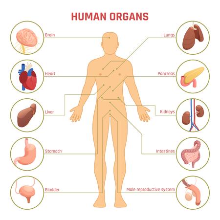 Infografía de diagrama isométrico con hombre.