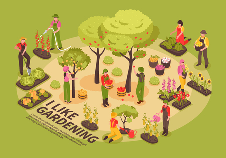 Affiche isométrique de composition d'éléments infographiques de jardinage avec arbres fleurs plantation de légumes arrosage chou citrouille récolte illustration vectorielle