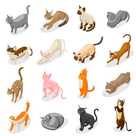 Purebred cats including scottish fold, bobtail, british, bombay and oriental breed isometric icons isolated vector illustration Illustration