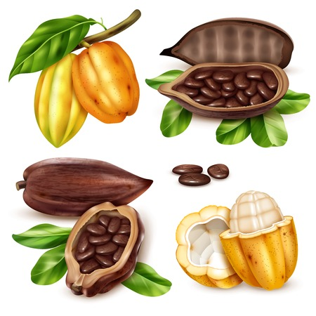 Isolated and realistic cocoa icon set with unripe and ripe fruit in cut form and whole vector illustration