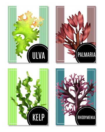 Set of realistic sea weeds posters or banners, food algae of various type, isolated vector illustration  Illustration