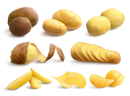 Raw and fried potato set of crude treated chopped and chips on white background realistic vector illustration