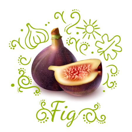 Exotic fruit fig with purple peel with green doodles composition on white background vector illustration  Ilustração