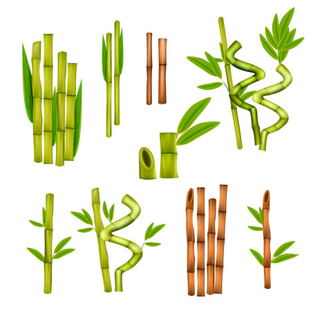 Green bamboo decorative elements and warm massage hollow canes tools various styles realistic set isolated vector illustration  Illusztráció