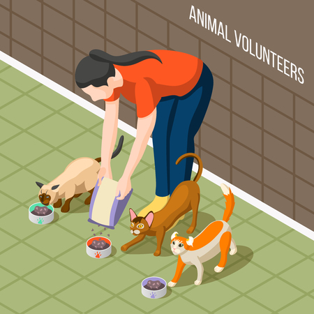 Girl volunteer during feeding cats, dry nutrition in bowls for hungry animals isometric background vector illustration Illustration