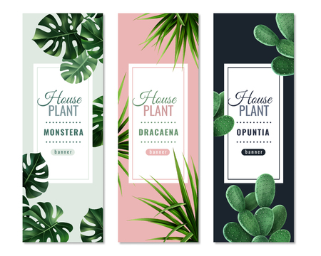 Realistic house plants vertical banners with monstera, dragon tree and prickly pear isolated vector illustration Иллюстрация