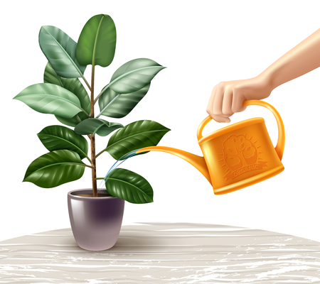 Hand with yellow watering can during irrigation of ficus standing on light table realistic vector illustration