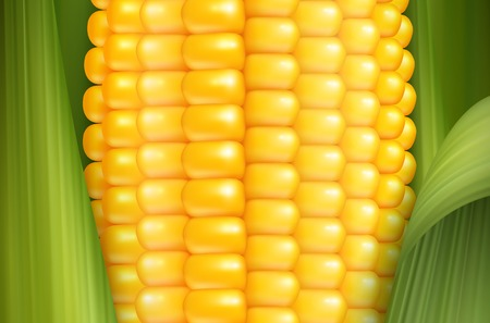 Corn cob close up with glossy yellow smooth grains and green leaves realistic background 3d vector illustration Illustration