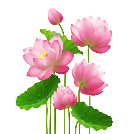 Bunch of beautiful lotus flowers with leaves close up isolated image on white background realistic vector illustration