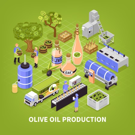 Olive production process isometric poster with fruit collection transportation oil extracting packaging infographic elements green background vector illustration  イラスト・ベクター素材