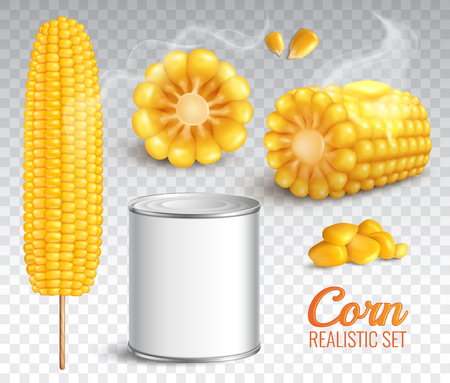 Realistic corn in cob, grains, baked buttered maize, canned product, set on transparent background isolated vector illustration