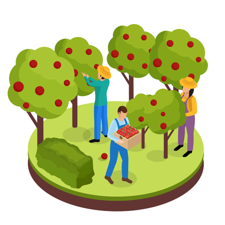 Ordinary farmers life isometric background composition with three green space workers collecting fruits from surrounding trees vector illustration
