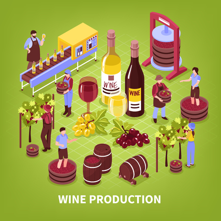 Wine production composition vineyard pressing of grapes bottling conveyor and aging in barrels isometric vector illustration