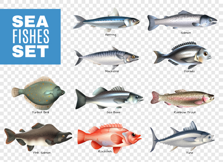 Set of sea fishes with letterings on transparent background isolated vector illustration Stock Illustratie