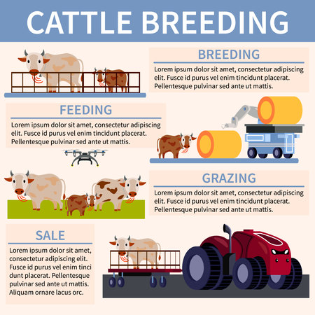 Colored smart farming orthogonal flat flowchart with feeding breeding grazing and sale descriptions vector illustration Illustration