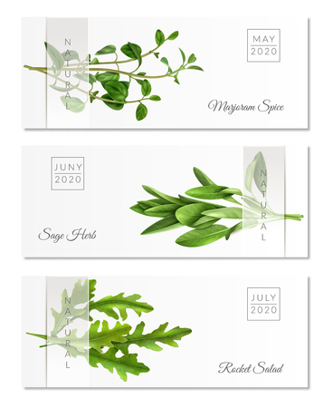 Set of horizontal banners with realistic herbs on white background with transparent ribbon isolated vector illustration Stock Illustratie
