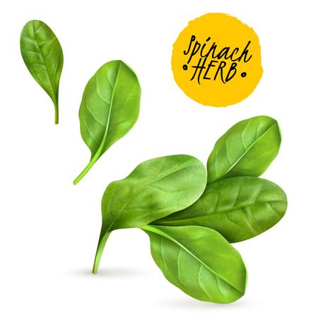 Verse babyspinazie laat een realistisch populair plantaardig beeld achter ter bevordering van gezond gekookt voedsel en rauwe kruiden vectorillustratie