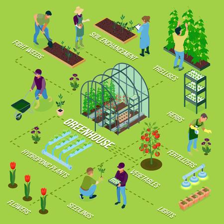 Composition d'organigramme isométrique à effet de serre avec des herbes de serre désherbage de fleurs semis sol fertilisation des légumes d'irrigation récolte illustration vectorielle