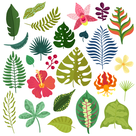 Tropical plants decorative elements collection with monstera leaves hibiscus orchids heliconia flowers fern fronds isolated vector illustration