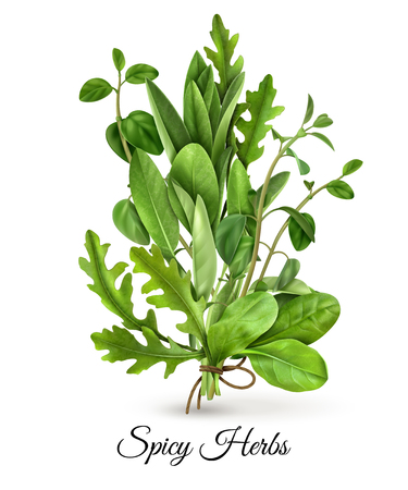 Realistic bunch of fresh green leafy vegetables spicy herbs with arugula spinach thyme white background vector illustration Illustration
