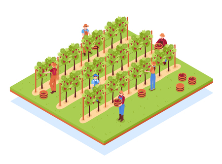 Winery isometric composition with workers in hats with baskets during harvesting on vineyard vector illustration