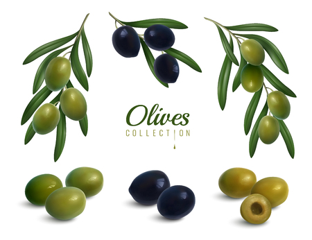 Set of realistic branches of olives with leaves, green and black glossy fruits isolated vector illustration Иллюстрация