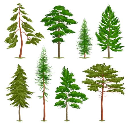 Reeks realistische pijnbomen van verschillend type dat op witte vectorillustratie wordt geïsoleerd als achtergrond