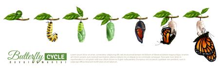 Horizontaler Satz der Schmetterlingsmetamorphose, der den Entwicklungszyklus von der realistischen Vektorillustration des Eies zum erwachsenen Insekt zeigt