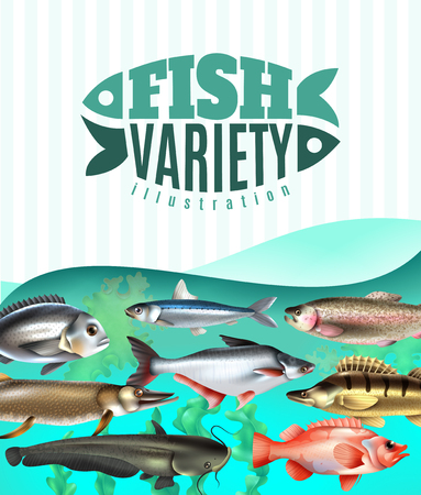 Marine and river fish variety underwater with sea weeds on turquoise background vector illustration Reklamní fotografie - 109672435
