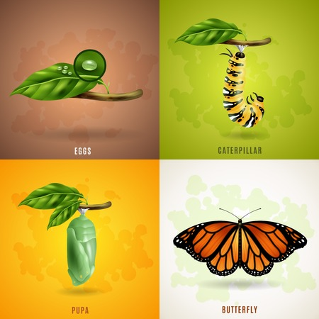 Butterfly 2x2 realistic design concept set developing stage of butterfly from eggs caterpillar pupa to imago vector illustration Illustration