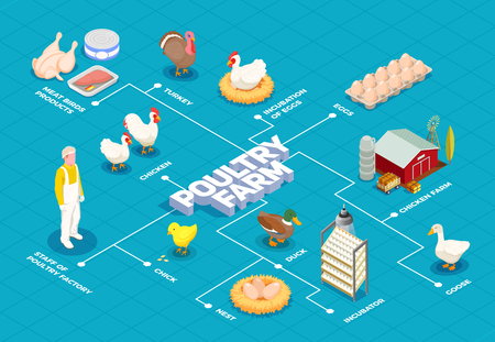Poultry farm flowchart with chicken farm turkey goose birds eggs meat products